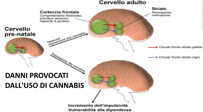 Cannabis and alcohol use, and the developing brain