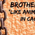 "Brothels: ""Like animals in cages"""