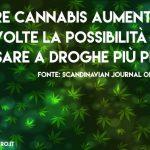 Cannabis legale. Chi lo vuole nasconde 5 cose