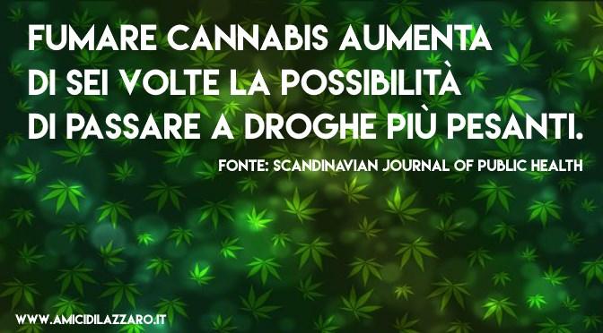 Cannabis legale. Chi lo vuole nascone 5 cose