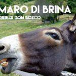 Il somaro di Brina (dalle Memorie di Don Bosco)