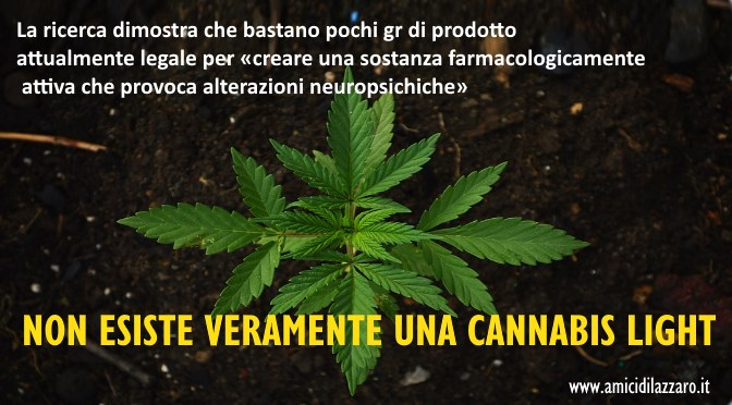 Cannabis, quella light non esiste