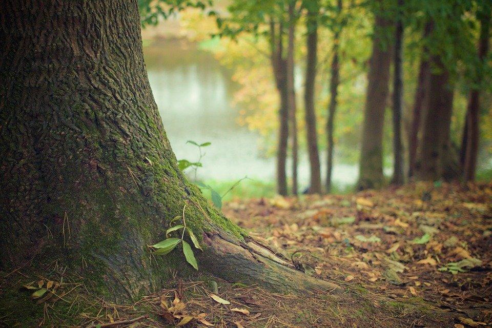 """L'""""errore"""" di Darwin sull'albero della vita"""